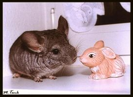 Chinchilla meeting Clay-Bunny by Villa-Chinchilla