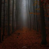 Autumn fog by MBKKR