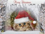 Xmas Cat by tinca2