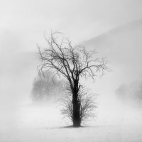 Silent tree. by ilsilenzio