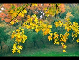 whispering among the leaves... by Iulian-dA-gallery