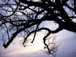 Branches Over The Sky by Rainbow826