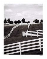Calumet Farm by dubtastic
