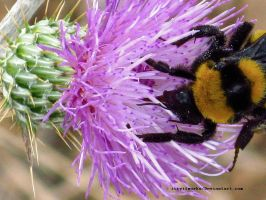 Bumble Bee. by itryitworks