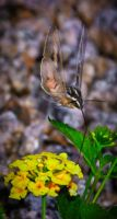 White-Lined Sphinx Moth by MindlessKitteh
