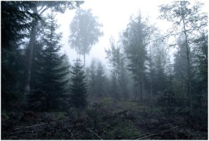 BG Forest Mist II by Eirian-stock
