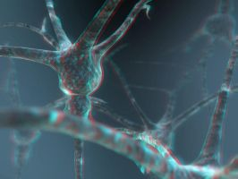 Neuron 3-D conversion by MVRamsey