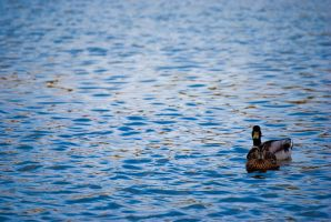 Birds ine the lake by Neo-ZoX