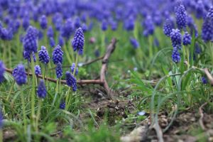 Stock Challenge: Spring by Malleni-Stock