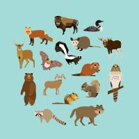 North American Animals by alysha-dawn