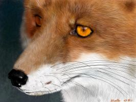 Sly Fox by Giselle-M