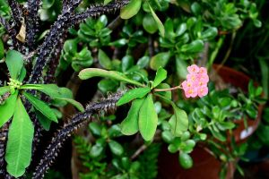 Crown of Thorns by Geak-of-Nature