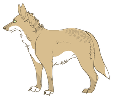 Canine Adopt [1] [CLOSED] by Tooel