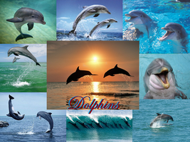 REQUEST: Dolphins by Lady1Venus