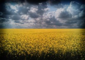 yellow field by Freds-head