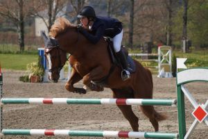 Chestnut Horse - Show Jumping stock - 11.3 by MagicLecktra