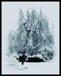 The Blizzard Tree by doomed-forever