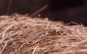 Dry Hay Wallpaper by miroslav-petrinec