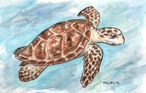 Sea Turtle by chrispco