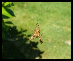 spider by kram666