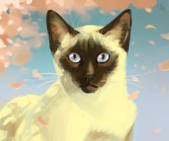 Siamese by Canvascope