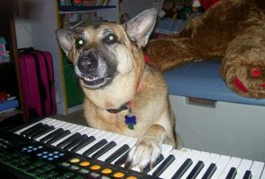 -oldpic-Cookie the keyboardist by Colliequest