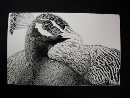 Peacock Pointillism by iacopellib