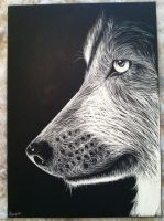 Wolf scratchboard by Shining-Ruse