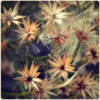 tiny messy flowers by fuamnach
