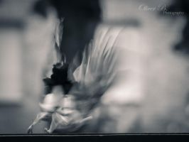 Taking Flight by OliverBPhotography
