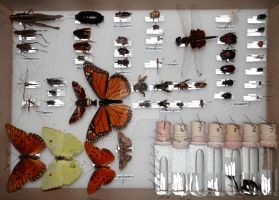 Insect collection by DHuff-art
