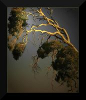 Ghost Gumtree by Wytch1