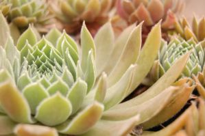 Hens And Chicks by MorbiferousMouse