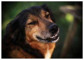 Smile dog by Lilia73