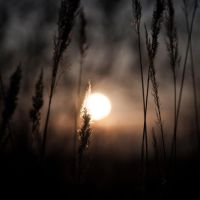 backlight_nov_1 by carrex