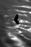 Ripples by esoup13
