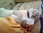 My cat loves wii xD by JARV69