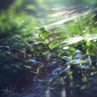 summer cobweb by all17