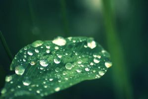 drops................... by nbd12