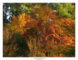 Fall Colors by MidnightDaisyStudio