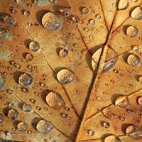 99592 by Fennecc