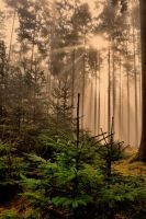 Forest tranquility by tomsumartin