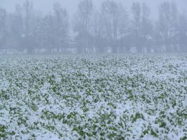 snow 14 by tegalus