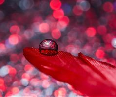 Red Disco by SheilaBrinson