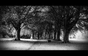 tree lines by awjay