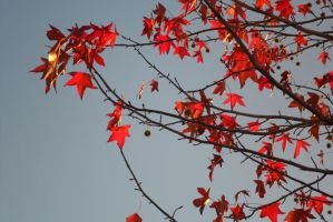 Red leafs by ShadowDreamer1