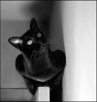 cat on doors BW by cougarLV