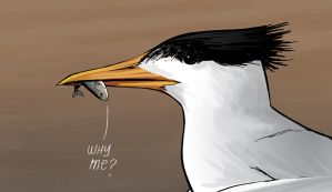 why me? by Entropician