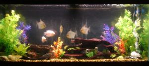 My Fishtank 2013 Update by OtakuEC