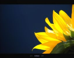 Sun Flower 2 by KATAT-ABBAS